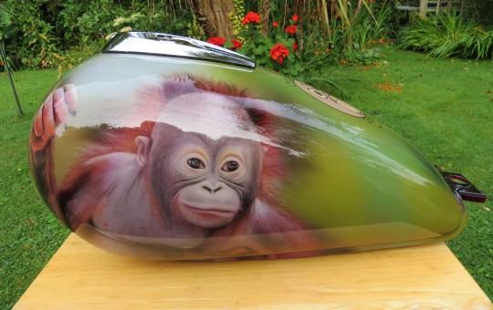 Bidu-Bidu Orangutan on a Yamaha YBR Custom
